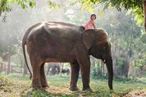 Фотография Азиатка Слоны Девочки