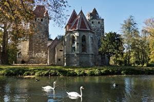 Фотография Австрия Замки Осенние Озеро Лебеди Птицы Pottendorf, Baden district Города