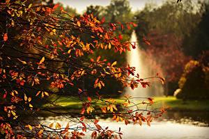 Обои Осенние Ветвь Листва Природа