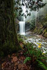 Картинки Канада Парки Водопады Деревья Мох Benson Creek Falls Regional Park Природа