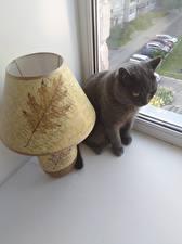 Фото Кошки плохое качество Животные