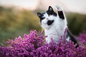Картинка Коты Лапы
