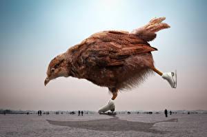 Фотография Оригинальные Птицы Курица Коньки Животные