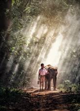 Картинка Слоны Азиатка Тумане Тропинка Мальчишки ребёнок
