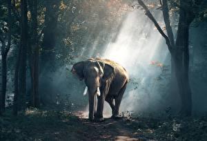 Фотографии Леса Слоны Тумане Животные