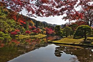 Фото Киото Япония Осенние Парки Сады Пруд Ветвь Деревья Природа
