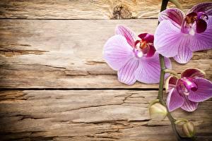 Картинка Орхидеи Розовых Доски Цветы