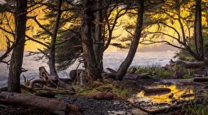 Обои для рабочего стола Река Побережье Деревьев Природа