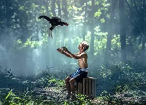 Фотография Петух Азиатки Тумана Старый мужчина Сидит животное