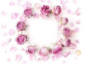 Картинки Розы Шаблон поздравительной открытки Фиолетовый Цветы
