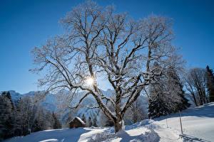 Фото Швейцария Зима Здания Снега Дерево Лучи света Braunwald Природа