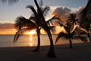 Фотография Тропики Рассветы и закаты Берег Пальмы Bahamas Природа