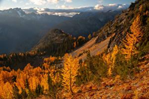 Фото Штаты Горы Осенние Деревьев Carne Mountain