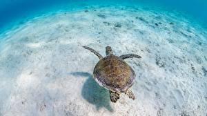 Фотография Подводный мир Черепахи