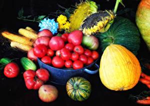 Фотография Овощи Томаты Кукуруза Подсолнечник Тыква Продукты питания