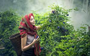 Картинки Азиаты Кусты Улыбка Корзина Туман