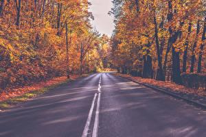 Картинки Осень Дороги Леса Дерево Природа