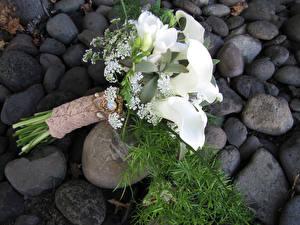 Картинка Букеты Каллы Фрезия Белый Цветы