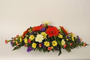 Фото Букет Гербера Хризантемы Гвоздики Цветной фон цветок