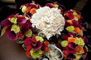Фото Букеты Розы Белокрыльник Цветы