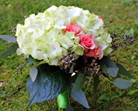 Обои Букеты Розы Гортензия Цветы картинки