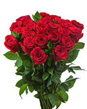 Обои Букеты Розы Белый фон Красный