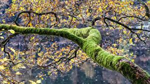 Картинка Ветвь Мох Природа