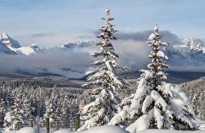 Картинка Канада Зимние Леса Снег Ель Туман Alberta Природа