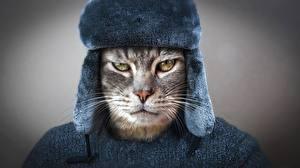 Фото Кошки Смотрит Морда Усы Вибриссы Шапки Хмурость Русские Животные