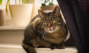 Фото Кошки Смотрит Усы Вибриссы Животные