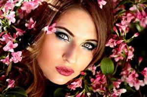 Фотография Глаза Губы Шатенка Лицо Смотрит Макияж Красивые Девушки