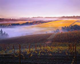 Фотографии Поля Рассвет и закат Осень Виноградник Туман Природа