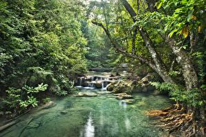 Фото Лес Речка Водопады Тропики Jungle Природа