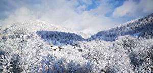 Фотография Германия Зимние Горы Леса Пейзаж Снег Berchtesgaden Природа