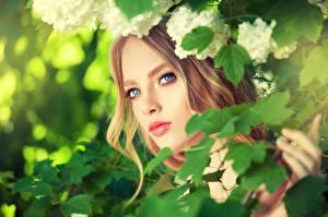 Фотография Взгляд Шатенка Красивые Лицо Девушки