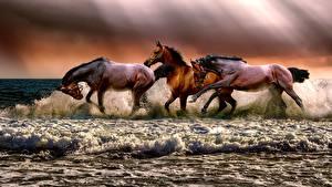 Фотографии Лошади Волны Втроем Бег С брызгами животное
