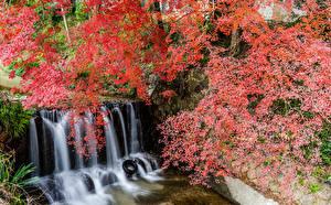 Обои Япония Парки Водопады Ветки Скала Shiga Природа картинки