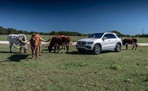 Фотография Мерседес бенц Быки Серебристая С рогами 2019 GLE 450 4MATIC Автомобили Животные