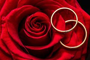 Фотографии Розы Крупным планом Красный Лепестки Ювелирное кольцо Двое Цветы