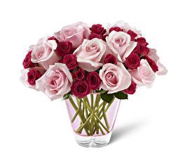 Картинка Розы Белый фон Ваза