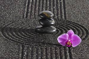 Фото Камни Орхидеи Круги zen Природа