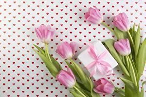 Фотография Тюльпан Розовый Подарки Цветы