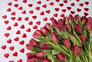 Фотографии Тюльпаны День всех влюблённых Сердце Цветы