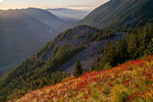 Фото Штаты Горы Леса Техас Трава