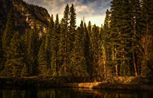 Картинка США Парк Леса Побережье Йосемити Ели Природа
