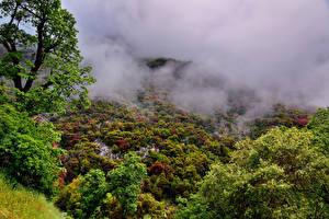 Фотографии США Парки Леса Калифорния Туман Деревья Sequoia National Park Природа