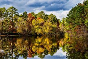 Фото США Реки Леса Осенние Техас Природа