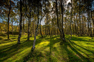Обои Великобритания Осень Парк Деревья Траве Bole Hill Derbyshire Природа