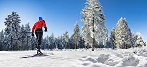 Картинка Зимние Лыжный спорт Снег Деревьев спортивная