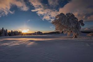 Фото Зимние Рассветы и закаты Снег Деревья Лучи света Природа
